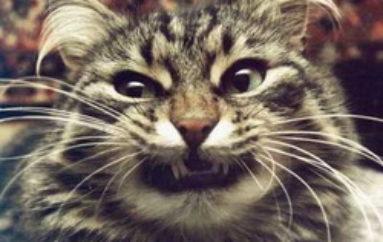 Кошка застойных времен