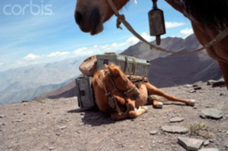 Почему дохнут кони?