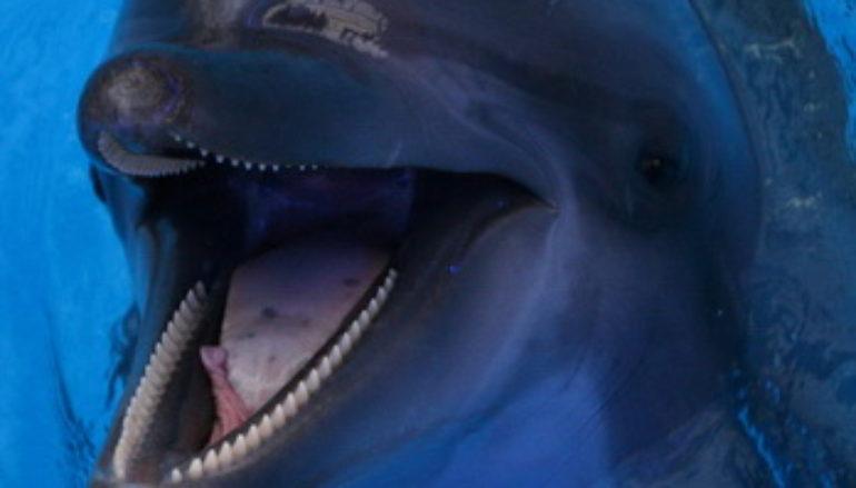 Дельфины в степях Украины