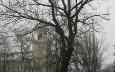 Вековые деревья