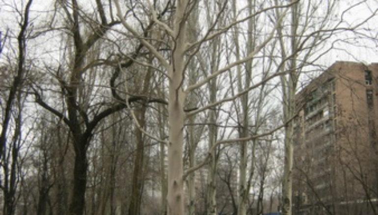 Вековые деревья. Часть 2