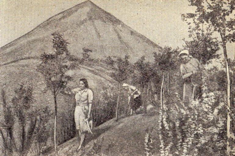 История с тамариском