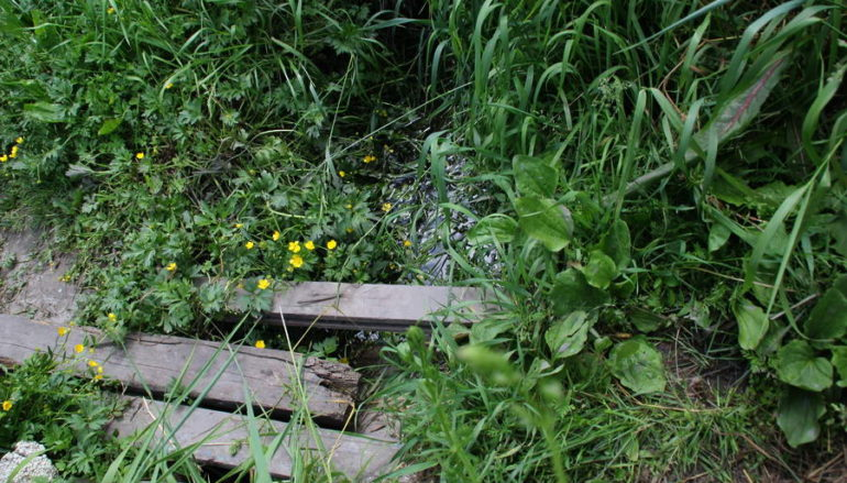 В поисках Ясеневого ручья