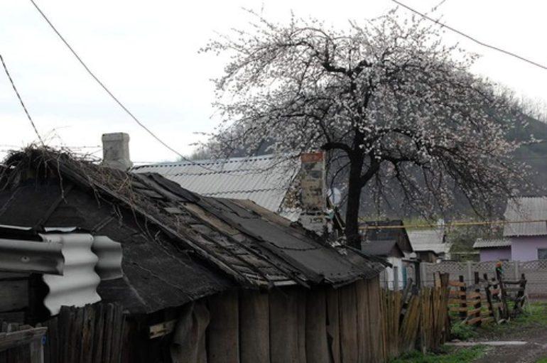 Стволы и ветки «Лидиевки»