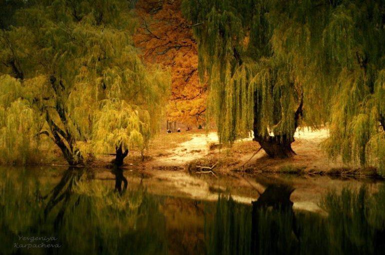 Дыхание Путиловского парка