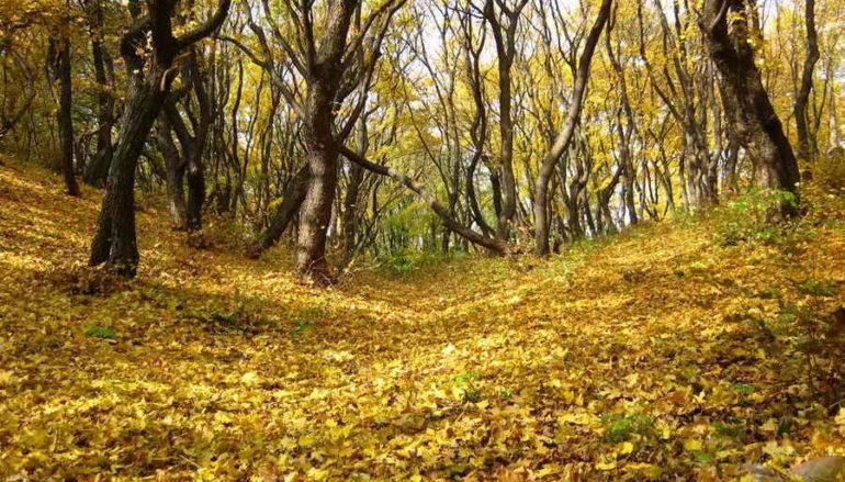В последнюю осень…