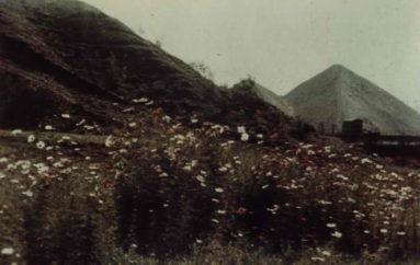 Из экологического альбома