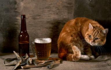 Воскрешение настоящего пива