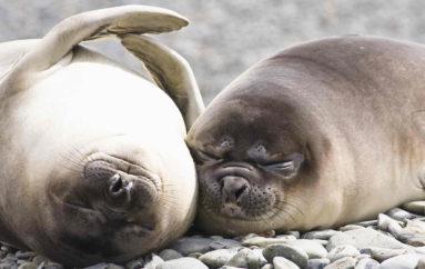 Шоу с тюленями