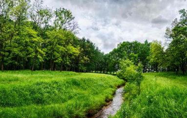 В Буденновском лесу
