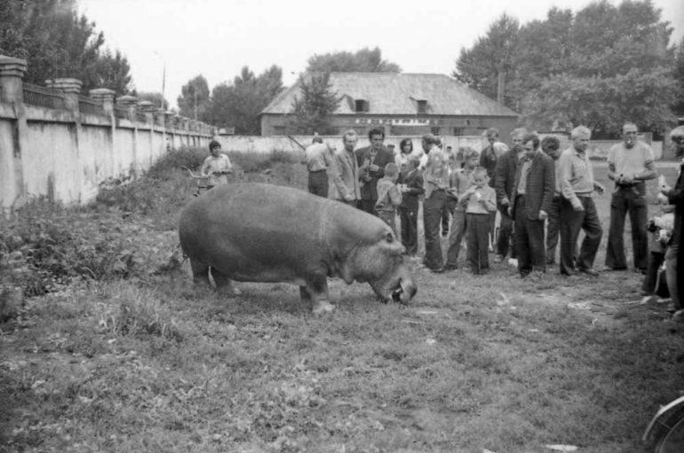Донбасс — родина бегемотов