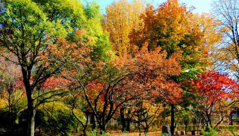 Осень в Ботсаду