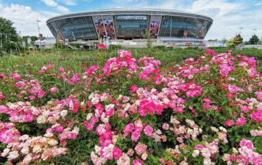 Цветы вокруг «Донбасс Арены»