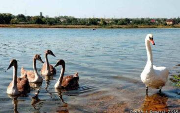 Волны Донецкого моря