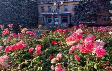 Розы для Семена Михайловича